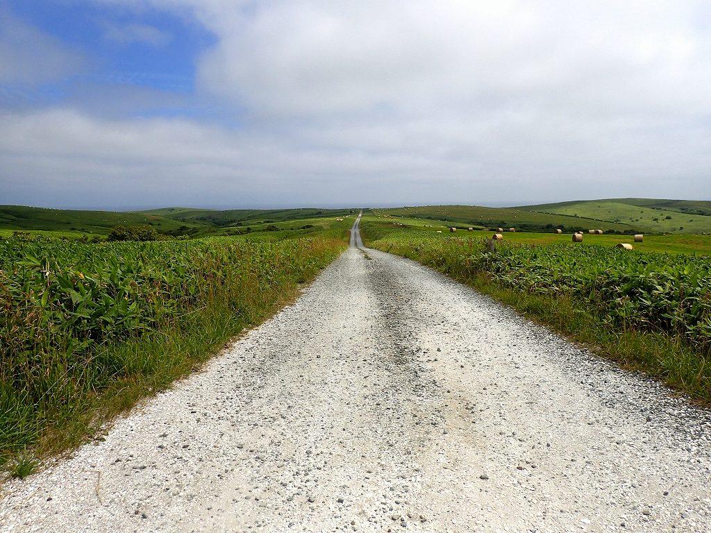 宗谷丘陵の白い道